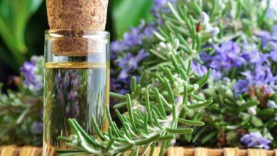 Photo of Olio di rosmarino: utilizzato da millenni grazie alle sue proprietà curative