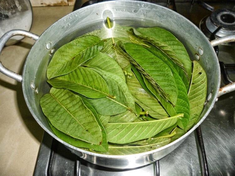 Tè di foglie di guava
