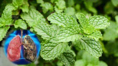 Photo of 14 piante che aiutano a pulire i polmoni e permettono di contrastare l'asma
