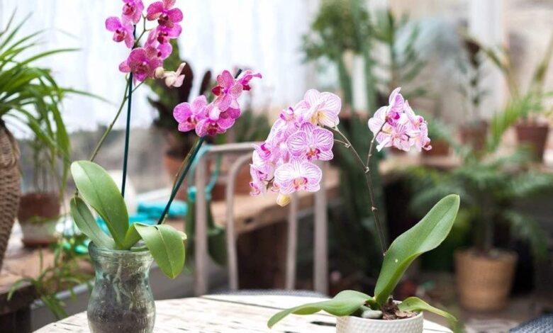 Orchidea purifica l'aria
