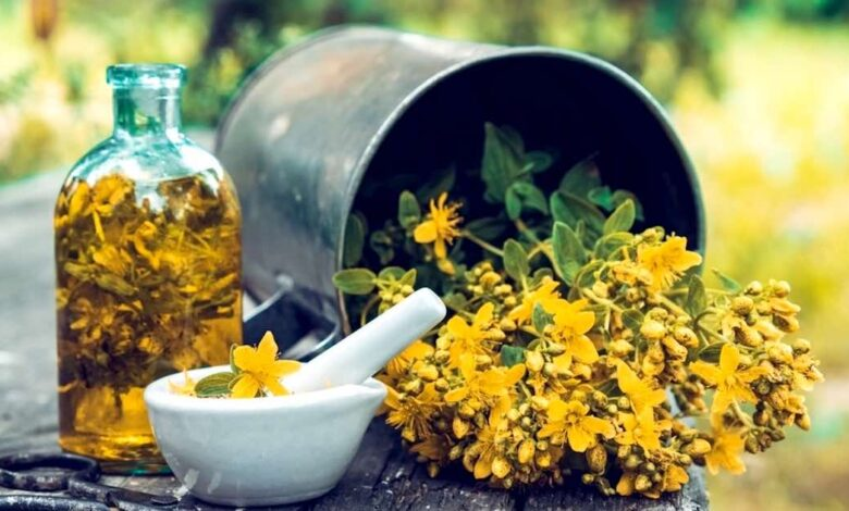 Olio di iperico, un potente antinfiammatorio e antibatterico