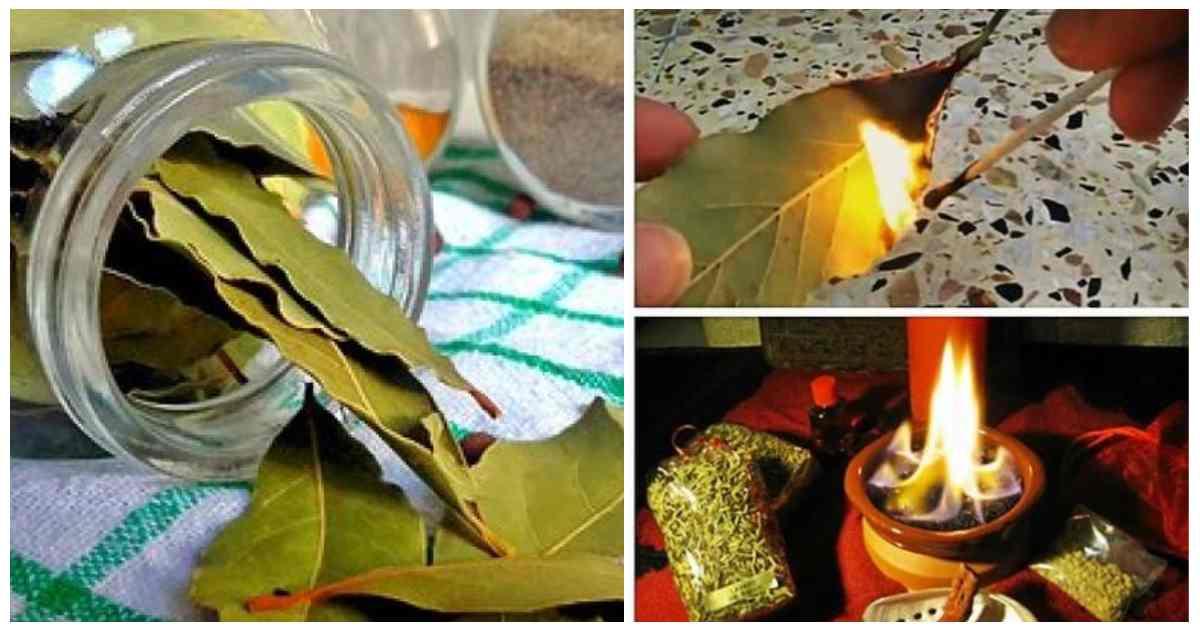 Cosa accade se bruci una foglia di alloro tutte le sere nella tua casa